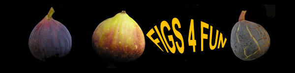 Figs 4 Fun Header